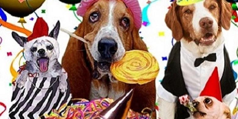 Thèmes de fêtes animaux pour tous les âges